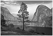 Tree, Kolana Rock and Hetch Hetchy reservoir. Yosemite National Park ( black and white)