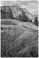 Flowers, grasses, and Hetch Hetchy Dome. Yosemite National Park ( black and white)