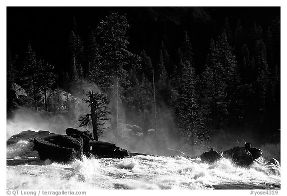 Tree in swirling waters, Waterwheel Falls, late afternoon. Yosemite National Park (black and white)