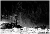 Tree in swirling waters, Waterwheel Falls, late afternoon. Yosemite National Park, California, USA. (black and white)