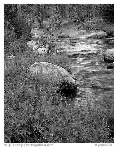 Lupine and stream, Tuolumne meadows. Yosemite National Park (black and white)