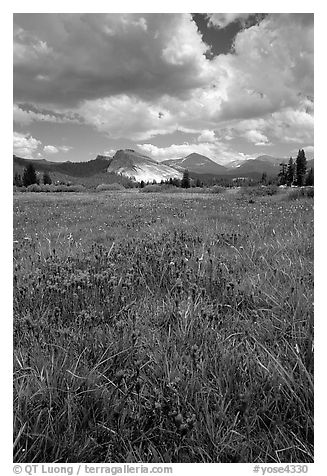 Storm light, Tuolumne meadows. Yosemite National Park (black and white)