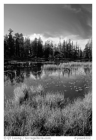Siesta Lake, autumn afternoon. Yosemite National Park (black and white)