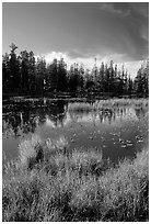 Siesta Lake, autumn afternoon. Yosemite National Park ( black and white)