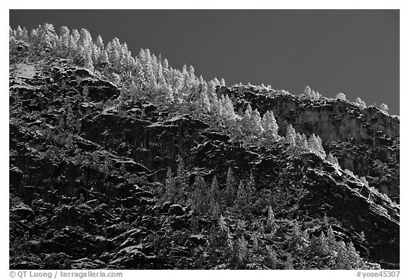 Frosted trees on valley rim. Yosemite National Park (black and white)