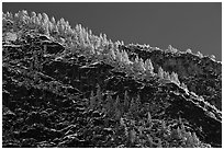 Frosted trees on valley rim. Yosemite National Park ( black and white)