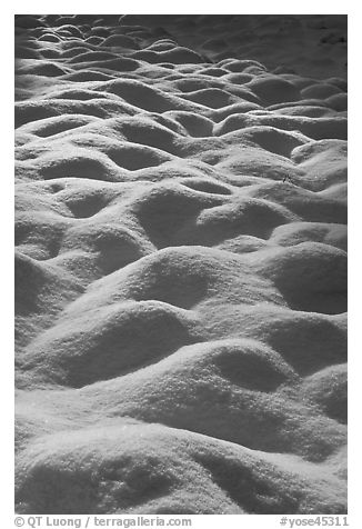 Snow mounds, Cook Meadow. Yosemite National Park (black and white)