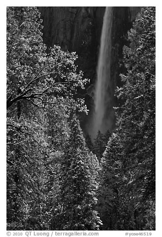 Bridalveil Fall after rare spring snow storm. Yosemite National Park (black and white)