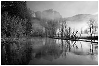 Merced River and early morning fog. Yosemite National Park ( black and white)