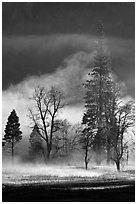 Morning fog and trees. Yosemite National Park, California, USA. (black and white)