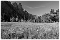 Wildflowers in flooded Cook Meadow,. Yosemite National Park ( black and white)