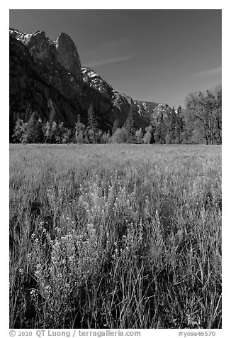 Wildflowers, Cook Meadow, and Sentinel Rock. Yosemite National Park (black and white)