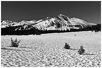 Suncups in Dana Meadow and Mammoth Peak. Yosemite National Park, California, USA. (black and white)