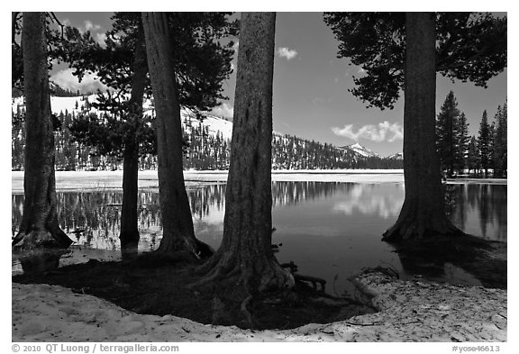 Tenaya Lake in the spring. Yosemite National Park (black and white)