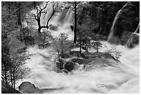 Islet of trees at confluence, Cascade Creek. Yosemite National Park ( black and white)