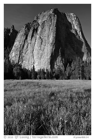 Irises and Cathedral Rocks. Yosemite National Park (black and white)