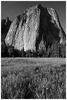 Irises and Cathedral Rocks. Yosemite National Park, California, USA. (black and white)