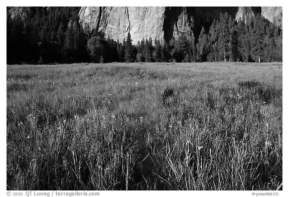 Irises, flooded El Capitan Meadow, and Cathedral Rocks. Yosemite National Park (black and white)