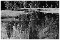 Unusual El Capitan Meadow reflections. Yosemite National Park ( black and white)
