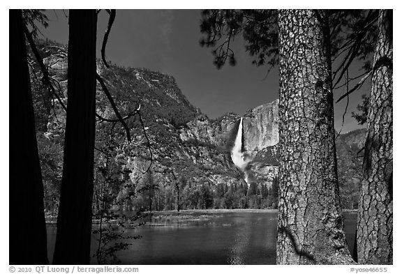 Yosemite Falls and flooded meadow framed by pines. Yosemite National Park (black and white)