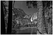Yosemite Falls and flooded meadow framed by pines. Yosemite National Park, California, USA. (black and white)