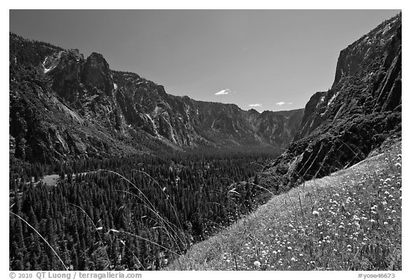 Wildflowers above Sunnyside Bench, Sentinel Rock, and Valley. Yosemite National Park (black and white)