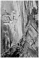 Trees and cliff, Diving Board. Yosemite National Park ( black and white)