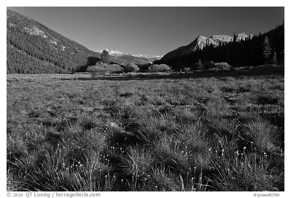 Meadow in Lyell Canyon, late afternoon. Yosemite National Park (black and white)