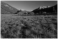 Meadow in Lyell Canyon, late afternoon. Yosemite National Park, California, USA. (black and white)
