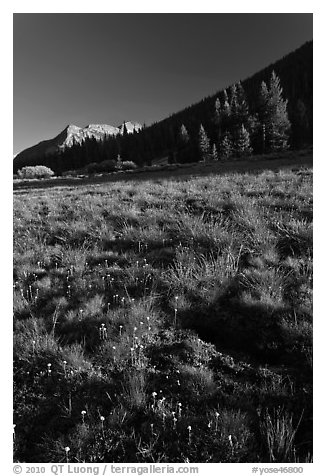 Lyell Canyon, late afternoon. Yosemite National Park (black and white)