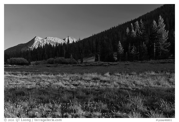 Meadow and Potter Point, Lyell Canyon. Yosemite National Park (black and white)