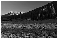 Meadow and Potter Point, Lyell Canyon. Yosemite National Park ( black and white)