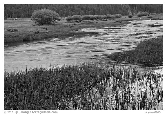Late afternoon reflections, Lyell Fork of the Tuolumne River. Yosemite National Park (black and white)