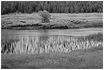 Hills reflected in stream, Lyell Canyon. Yosemite National Park ( black and white)