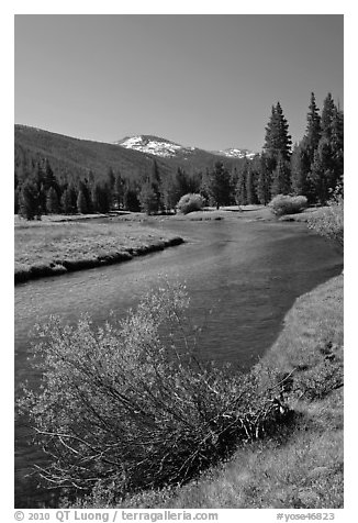 Lyell Fork of the Tuolumne River, morning. Yosemite National Park (black and white)