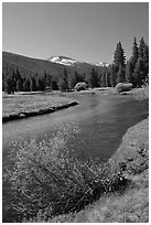 Lyell Fork of the Tuolumne River, morning. Yosemite National Park ( black and white)