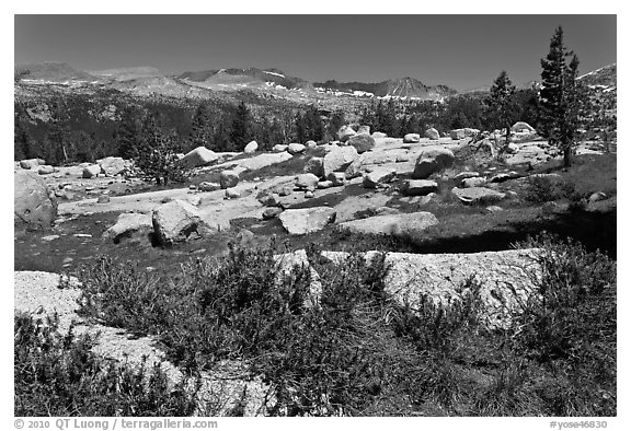 Alpine flowers and high Sierra range from pass. Yosemite National Park (black and white)