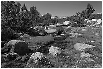 Stream and alpine meadow. Yosemite National Park, California, USA. (black and white)