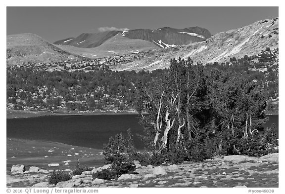 Evelyn Lake and trees. Yosemite National Park (black and white)