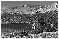 Evelyn Lake and trees. Yosemite National Park ( black and white)