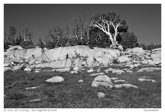 Meadow, rocks, and trees. Yosemite National Park (black and white)