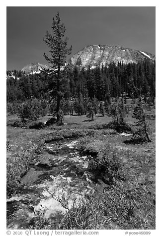 Stream and lush meadow, Lewis Creek. Yosemite National Park (black and white)