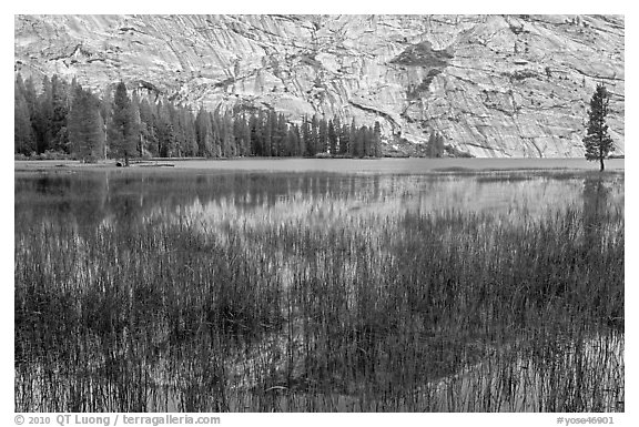 Reeds and reflecions, Merced Lake. Yosemite National Park, California, USA.