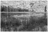 Reeds and reflecions, Merced Lake. Yosemite National Park ( black and white)