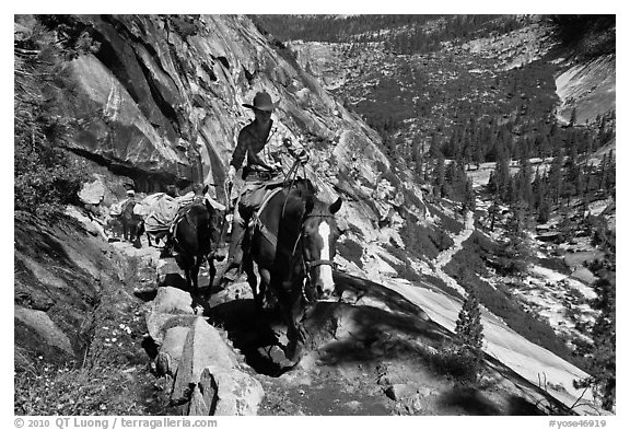 Woman leading horse pack train on trail, Upper Merced River Canyon. Yosemite National Park (black and white)