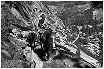 Woman leading horse pack train on trail, Upper Merced River Canyon. Yosemite National Park, California, USA. (black and white)