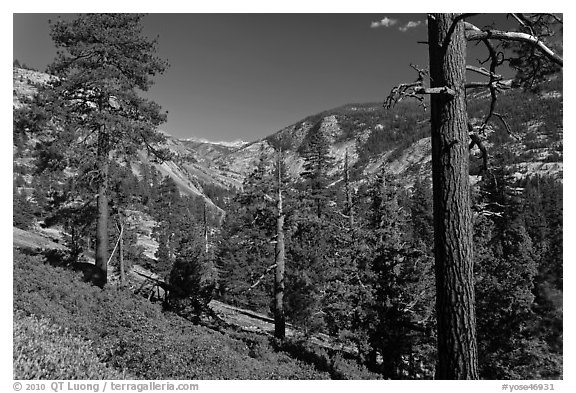 Above Echo Creek. Yosemite National Park (black and white)