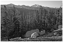 Sunrise over forest and peaks. Yosemite National Park ( black and white)