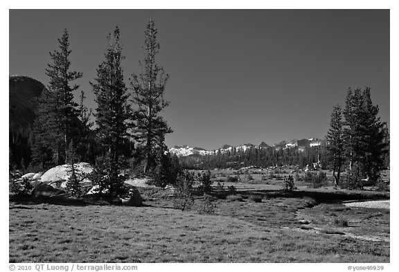 Long Meadow, morning. Yosemite National Park (black and white)
