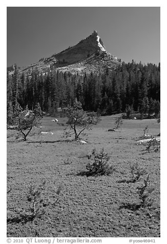 Meadow and Tressider Peak. Yosemite National Park (black and white)